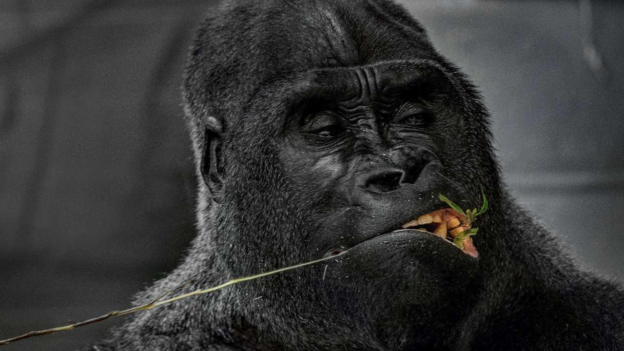 Foodservice Distributors face the 800lb Gorilla